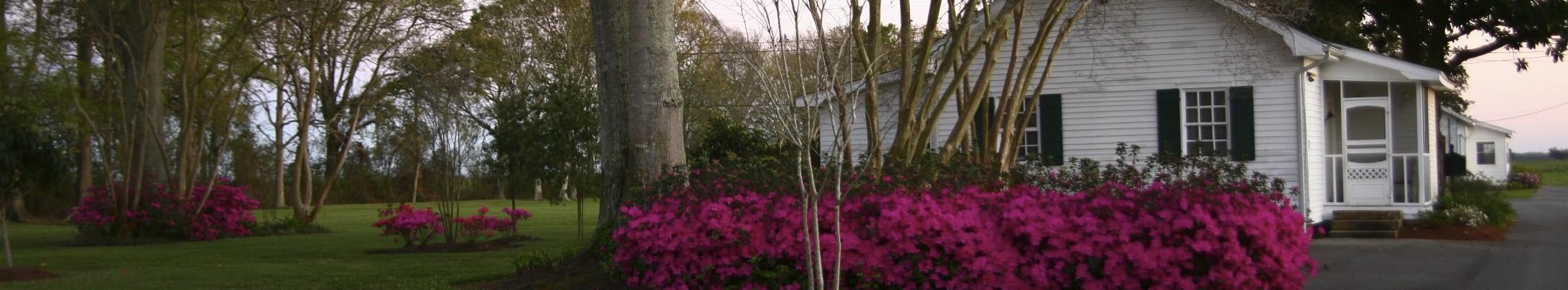 Cottage 6 gardens